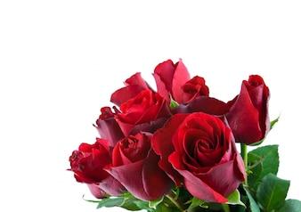 Afecto romántico rosa fragante