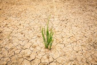 Agrietado seco de la tierra