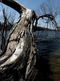 agua árbol muerto