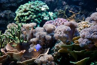 Algas y plantas marinas