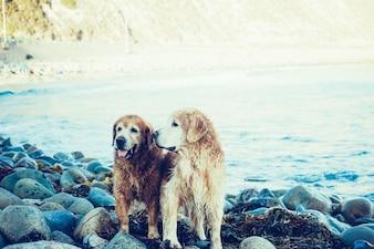 Amigos mojados