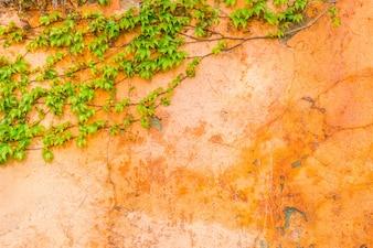 Antiguo muro de piedra con hojas.