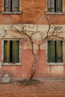 Árbol creciendo en la pared de un edificio