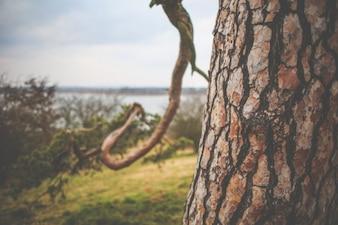 Árbol de cerca