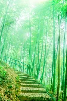 Árbol de hoja de madera tronco de bambú