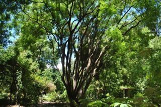 Jard n de sombra descargar fotos gratis for Arbol de sombra para jardin