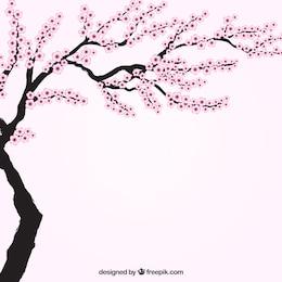 Árbol del cerezo en flor