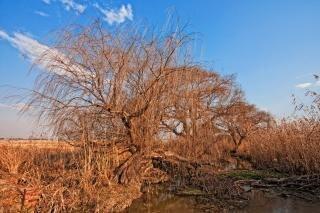 árbol desnudo estéril