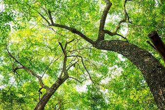 Árbol en el bosque con la hoja verde