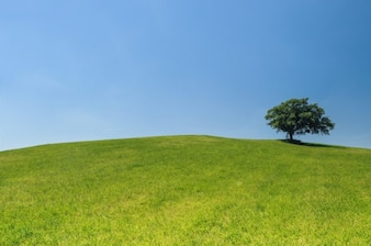 árbol en una colina verde