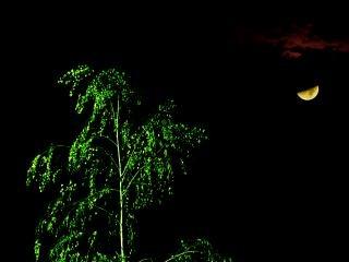 árbol iluminado por la luna marciana