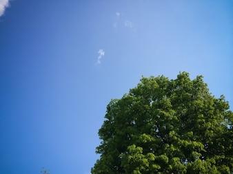 Árbol mirando al cielo