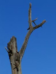 árbol muerto muerto