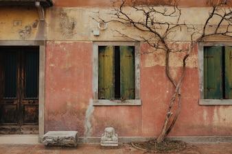 Árbol seco en la fachada de un edificio