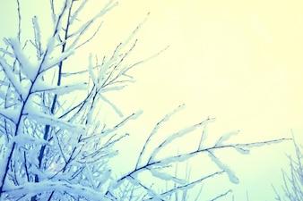 Árbol seco nevado