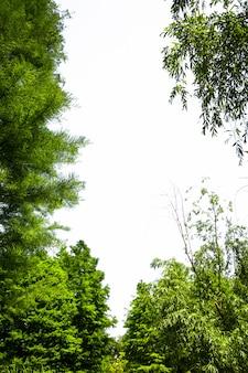 Árbol verde con fondo blanco