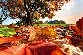 Árbol visto desde las hojas del suelo