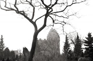 árbol y de la iglesia, gótico