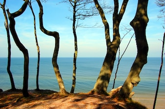 Árboles cerca de la playa