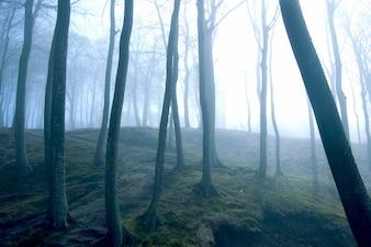 Árboles con niebla