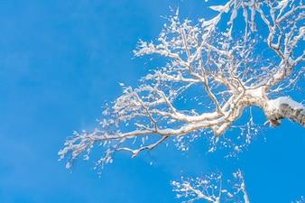 Árboles del invierno cubiertos con nieve