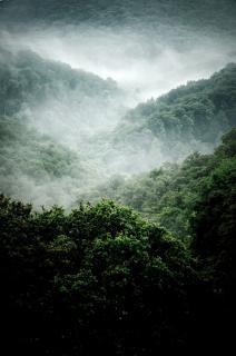 árboles niebla