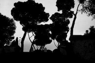 árboles oscuros