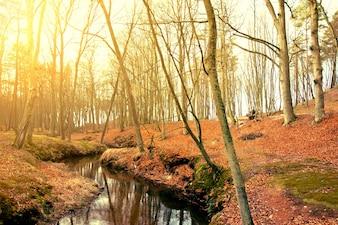 Árboles secos cerca de un río