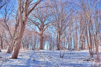 Árboles secos con nieve
