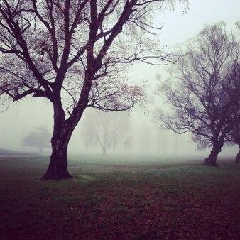 árboles sombríos