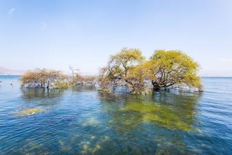Árboles sumergidos en un lago