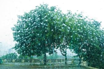 Árboles verdes en un prado