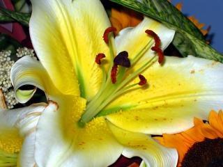 arreglos florales chino