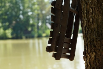 Asiento de madera y árbol