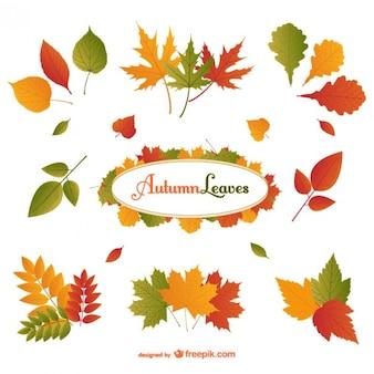 Hojas de otoño paquete de vectores