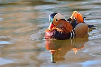 Ave nadando en un lago