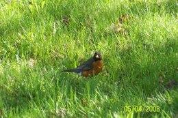 aves, la fauna silvestre