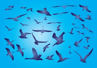 aves libres
