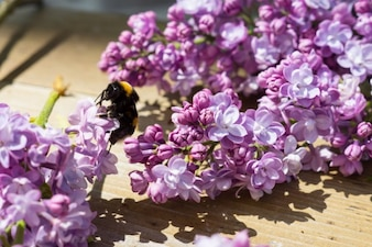 Avispa y violeta flores