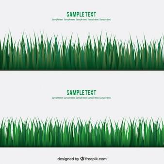 Banners de la hierba verde