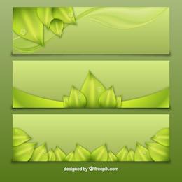 Banners verdes con hojas