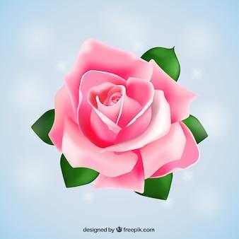 Gran rosa rosa