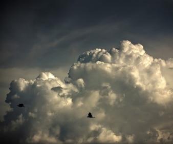 Pájaros que vuelan en el cielo