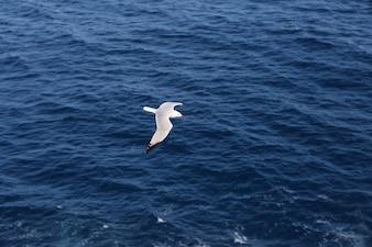 Blanca y alas negras