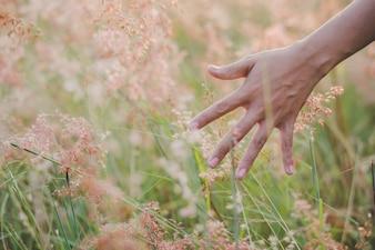 Blanco tacto rural hierba humano
