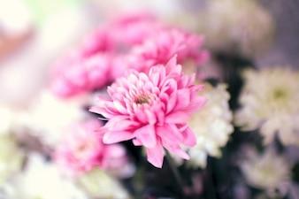 Flor rosada de la flor