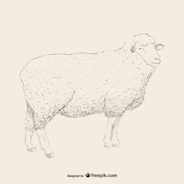Boceto de oveja