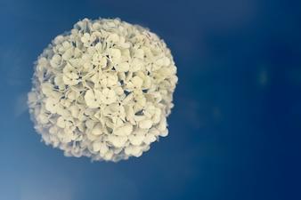 Bola de flores en un fondo azul