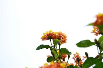 Bonitas flores de exterior
