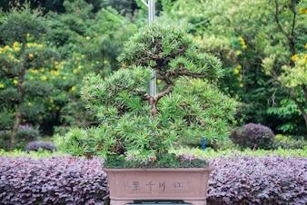 Bonsai creciendo en el jardín